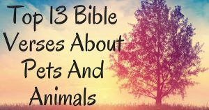 Top 13 Bible Verses About Pets And Animals